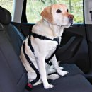 Car safety harnesses