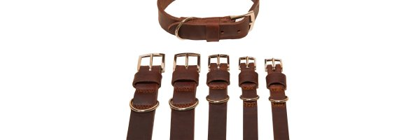 Dog leashes, collars & harnesses