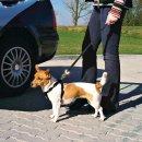 Auto-Sicherheitsgeschirre