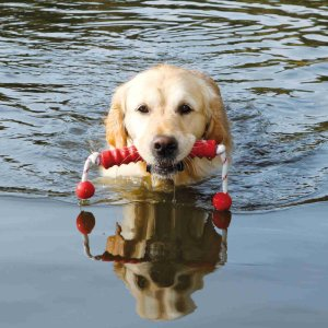 Dog Activity Long-Mot®, Floatable